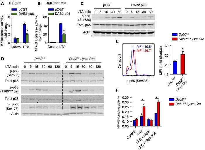 DAB2 regulates NF-κB activity by suppressing phosphorylation of p65 (Ser...
