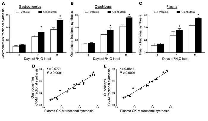 Effects of clenbuterol treatment on f of CK-M in rat muscles and plasma....