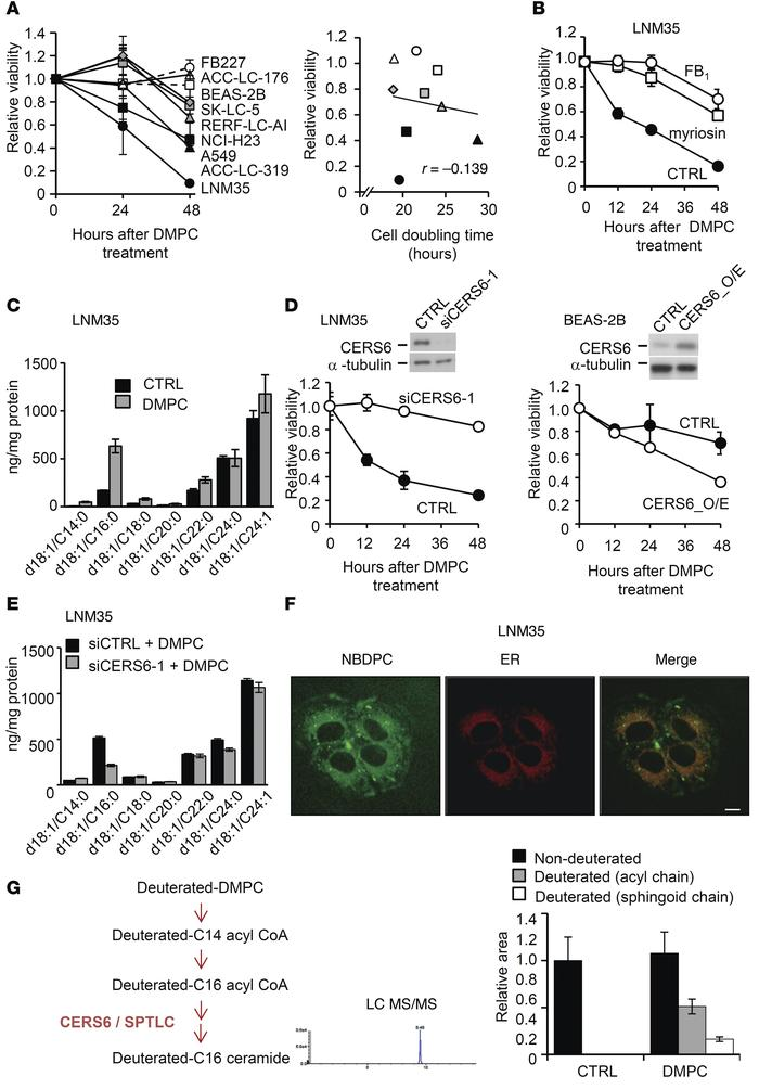 DMPC liposome induces CERS6-dependent apoptosis. (A) MTT assays were per...