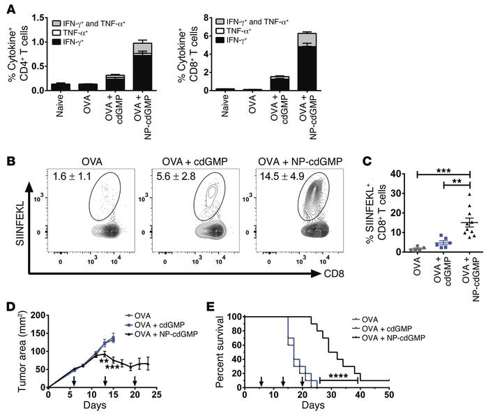 NP-cdGMP promotes potent CD8+ T cell responses and therapeutic antitumor...
