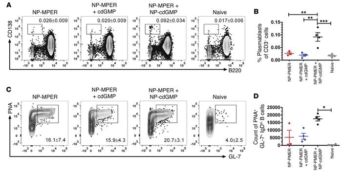 Primary plasmablast and germinal center formation is enhanced with NP-cd...