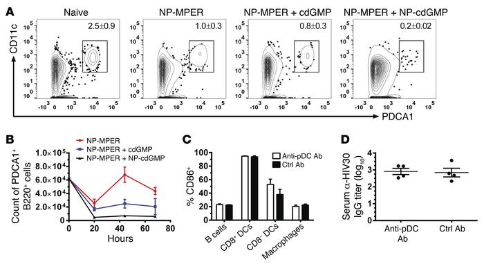 NP-cdGMP–adjuvanted vaccine responses are independent of pDCs. (A and B)...