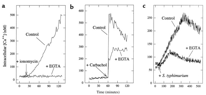 Chelation of extracellular Ca2+ indicates S. typhimurium–induced [Ca2+] ...
