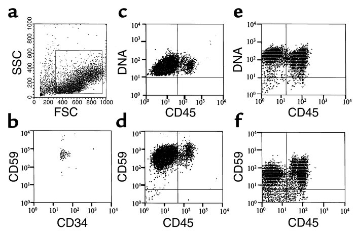 Method of CD34+ cell collection and phenotype of CD34+ cell progeny from...