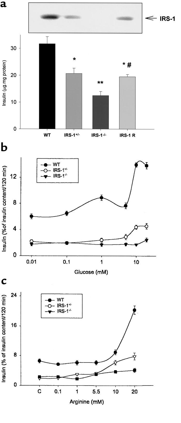 Insulin content is partially restored in IRS-1 re-expressing cultured β-...