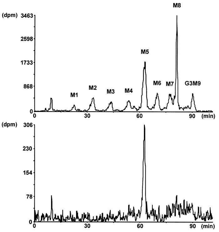 Lipid-linked oligosaccharide profile in a CDG-Ie patient. [3H]oligosacch...