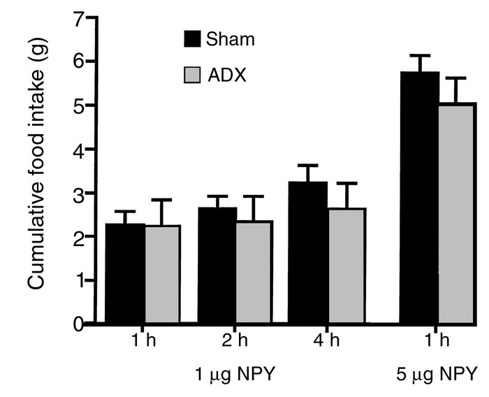 The effect of adrenalectomy on NPY-induced food intake in rats. Rats rec...