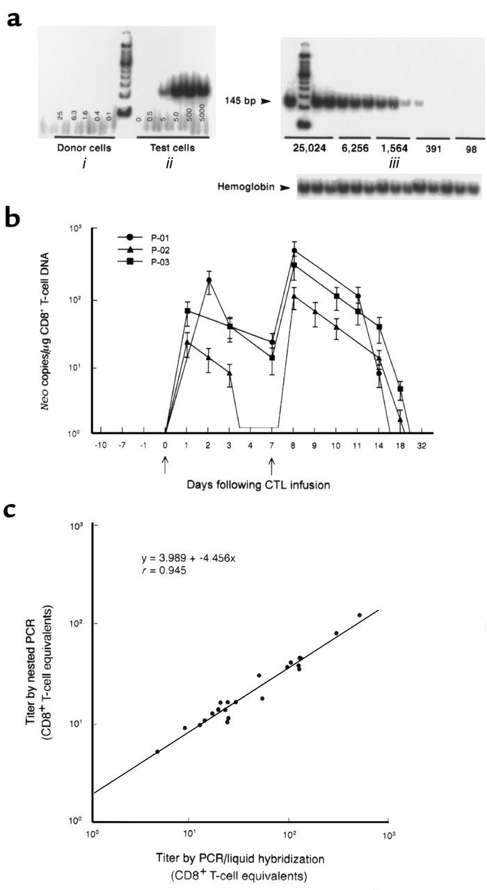 Analysis of PBMC for the in vivo persistence of neo-transduced CD8+gag-s...