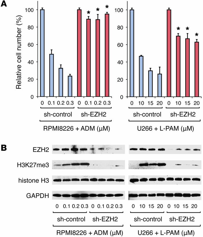 Inhibition of H3K27me3 by EZH2 knockdown recapitulates CAM-DR under stro...