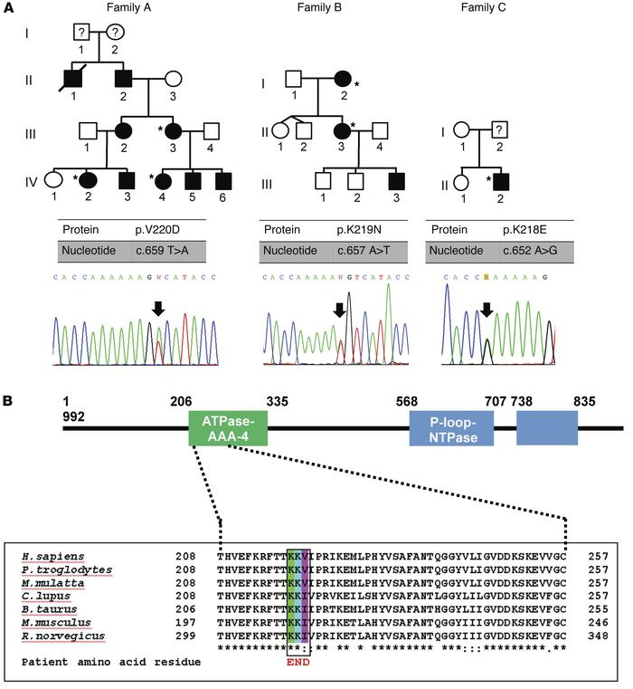 Identification of SLFN14 mutations in 3 unrelated families with a domina...