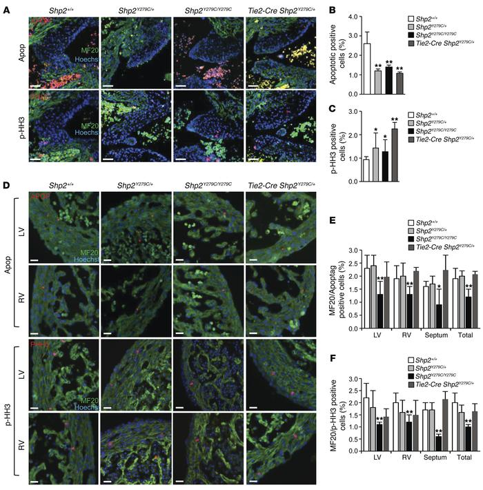 NSML expression affects both apoptosis and proliferation in the developi...