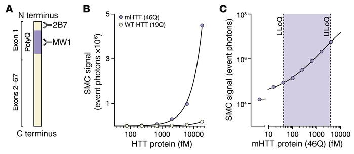 The mHTT SMC immunoassay is specific and sensitive. (A) Schematic of mHT...