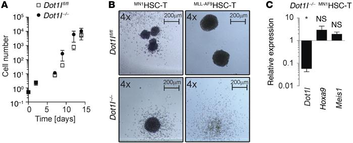 MN1HSC-T grow independently of DOT1L in vitro but not in vivo. (A) Seri...