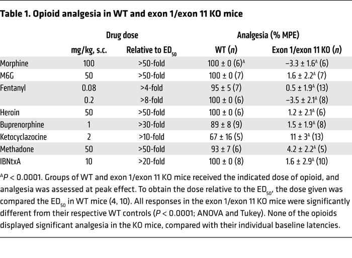 Opioid analgesia in WT and exon 1/exon 11 KO mice