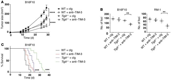 TIM-3 and TIGIT synergize to suppress antitumor immunity. (A) WT and Tig...