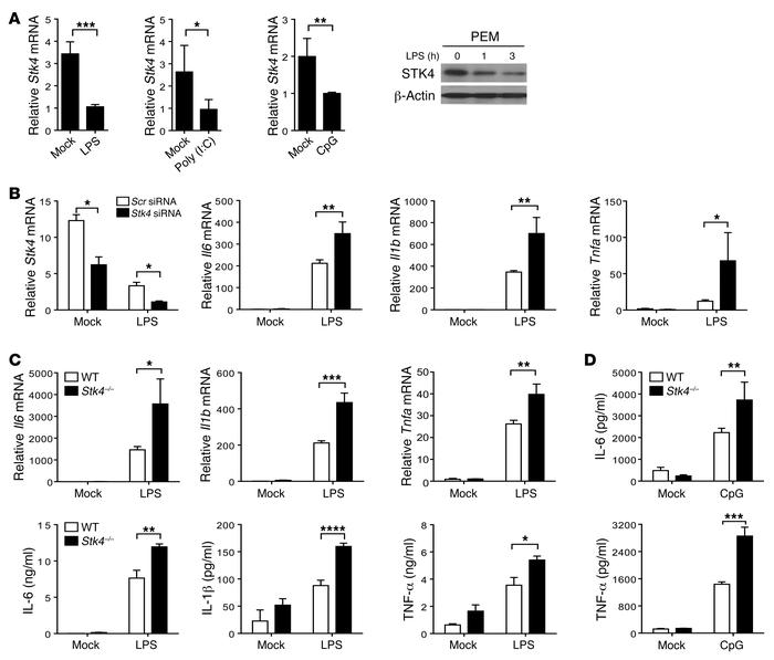 JCI - STK4 regulates TLR pathways and protects against chronic