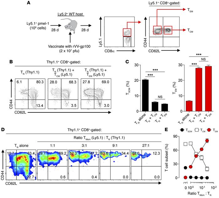 TMem cells augment naive cell phenotypic maturation during priming. (A) ...