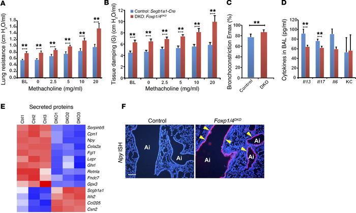 Loss of Foxp1 and Foxp4 in airway epithelial cells promotes AHR and indu...