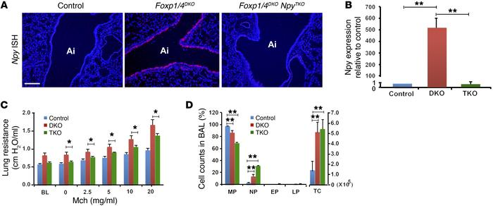 Loss of Npy expression rescues the AHR phenotype in Foxp1/4DKO mutants a...
