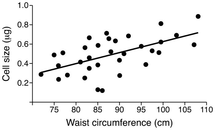 Association between waist circumference and SAT adipose cell size. Waist...