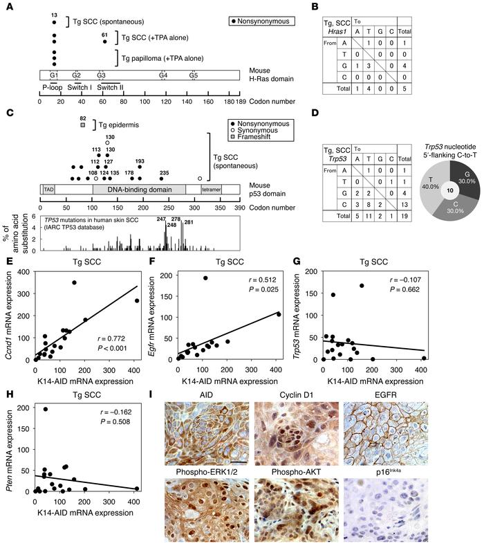 Molecular characterization of spontaneous SCC in K14-AID–Tg mice. (A) Co...