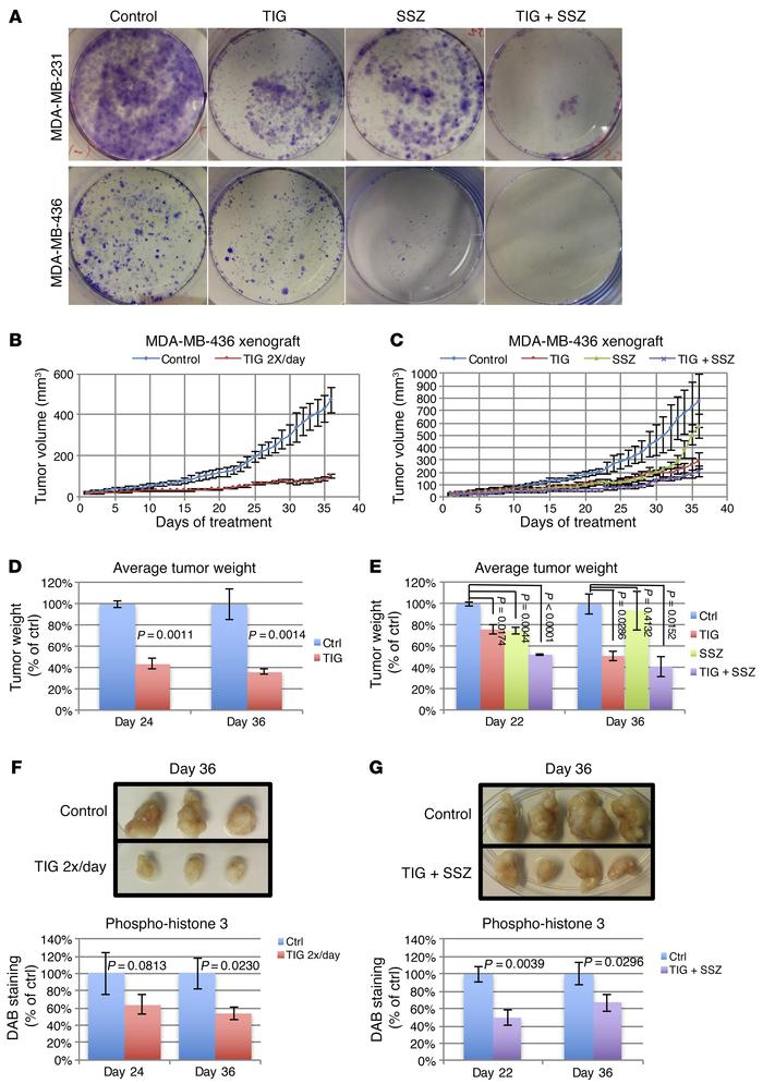 Potent suppression of RB1/TP53-deficient TNBC xenograft growth by TIG wi...