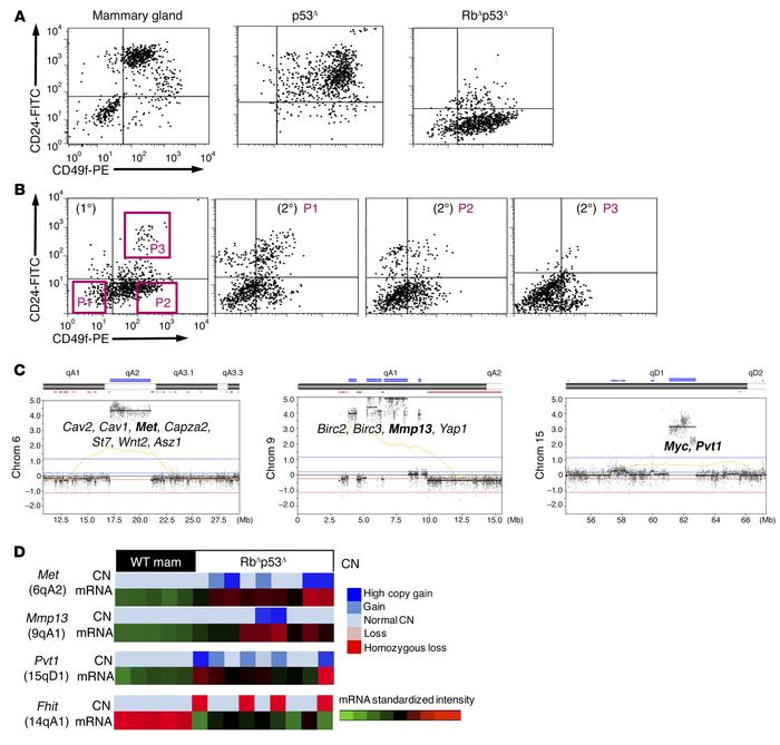 Rb/p53-deficient mammary tumors show a high frequency of CD49f+CD24– TIC...
