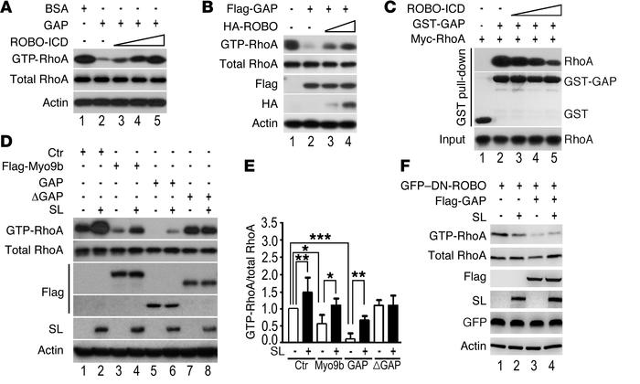 SLIT/ROBO signaling suppresses Myo9b RhoGAP activity. (A) Addition of pu...