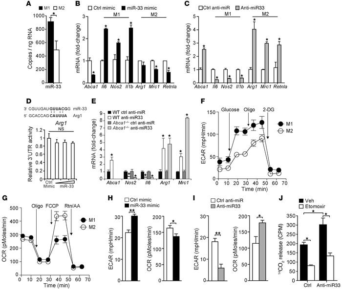 miR-33 regulates macrophage polarization. (A) Relative expression levels...