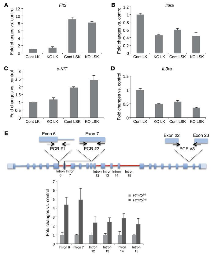 PRMT5 loss impairs the expression of cytokine receptors via both transcr...