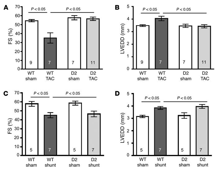 Preserved cardiac function in D2 mice following TAC but not shunt surger...