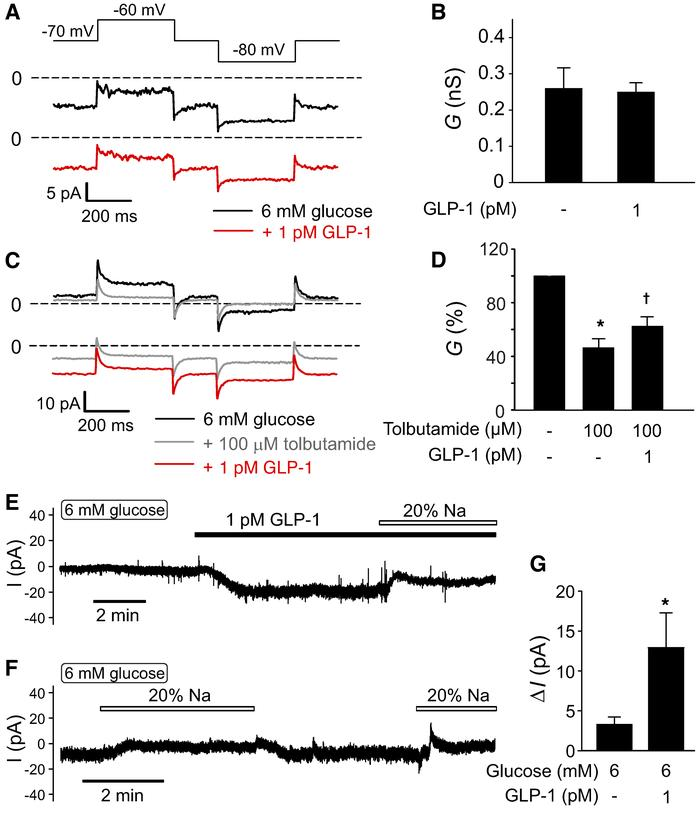 Physiological concentrations of GLP-1 activate a depolarizing membrane c...