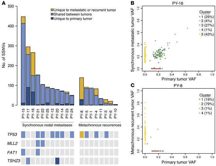 SSNVs in HNSCC tumors. (A) Top panel: distribution of SSNVs in each tumo...