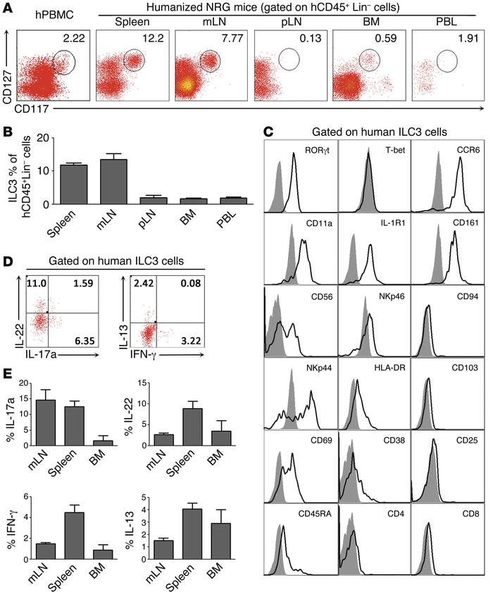 Development of functional ILC3s in lymphoid organs in NRG-hu mice. (A) R...