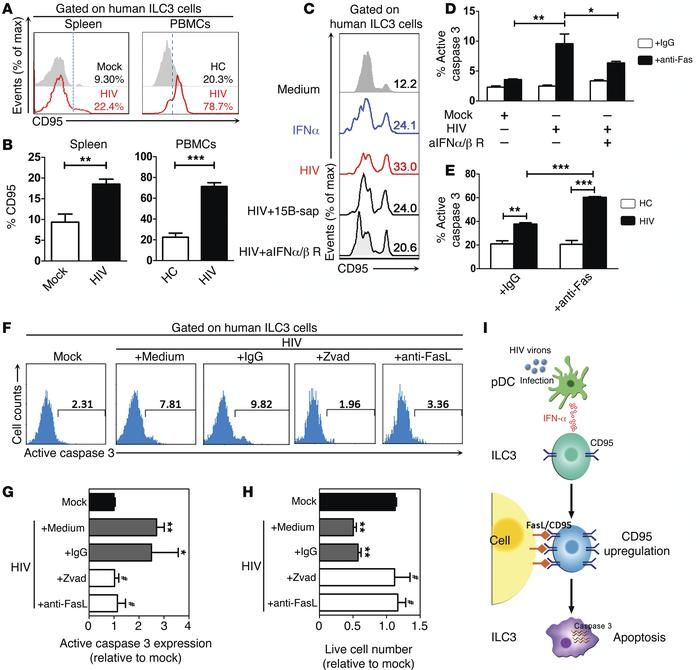 HIV-1 infection upregulates CD95 on ILC3s through pDC/IFN-I–dependent me...