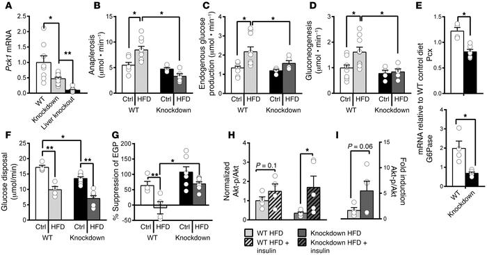 Preventing the induction of anaplerosis/cataplerosis during a HFD protec...
