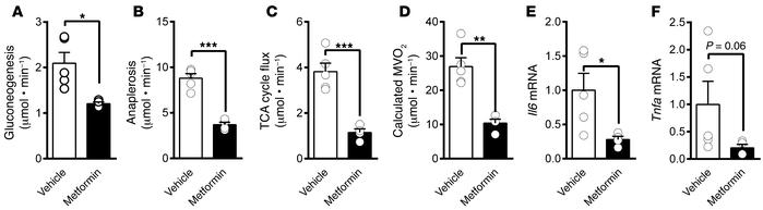 Metformin suppressed oxidative metabolism and anaplerosis and lowered in...