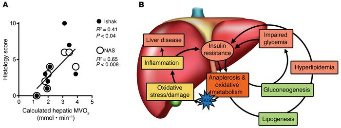 Histological data support a role for oxidative metabolism in NAFLD in hu...