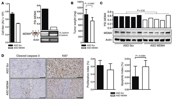 MDM4 ASO–mediated exon 6 skipping reduces growth of DLBCL in vivo and in...