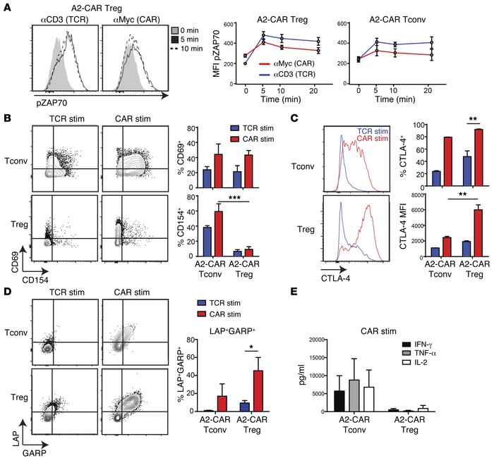 A2-CAR–mediated stimulation activates Tregs. (A) Signaling downstream of...