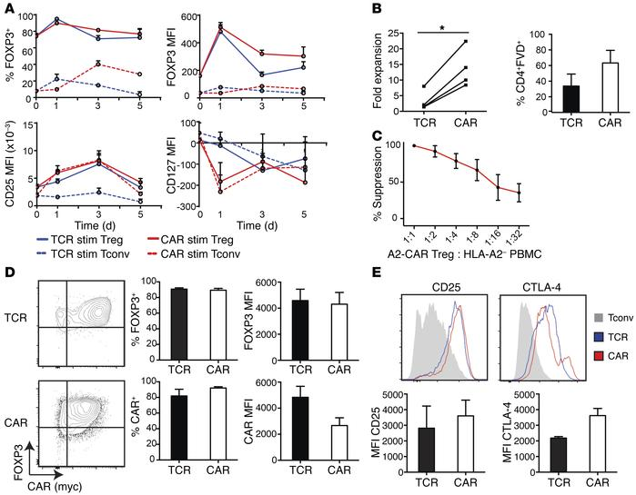 A2-CAR–mediated stimulation and expansion maintains a Treg phenotype. A2...