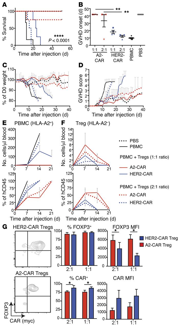 HLA-A2 CAR Tregs are superior to polyclonal Tregs at preventing xenogene...