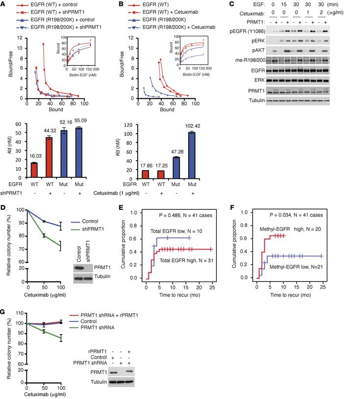 EGFR methylation regulates EGF binding to EGFR and correlates with highe...