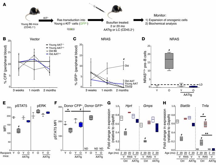 Reducing inflammation in aged AATtg mice suppresses selection for oncoge...