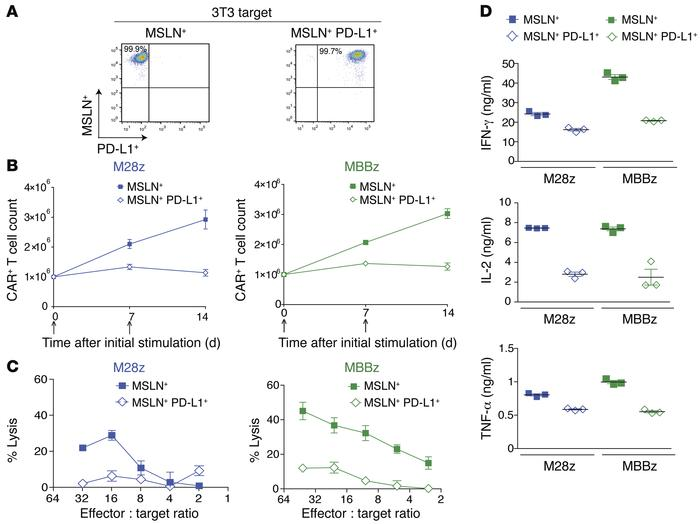 PD-L1 inhibits CAR T cell effector function. (A) 3T3 fibroblasts were tr...