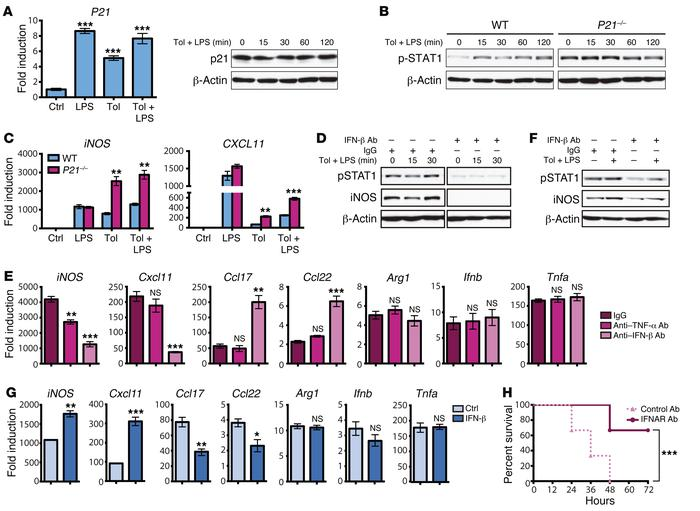 IFN-β neutralization reduces STAT1 phosphorylation and induces hyporespo...