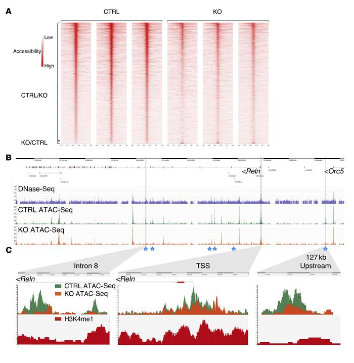 CHD7 deletion alters chromatin organization and reduces DNA accessibilit...