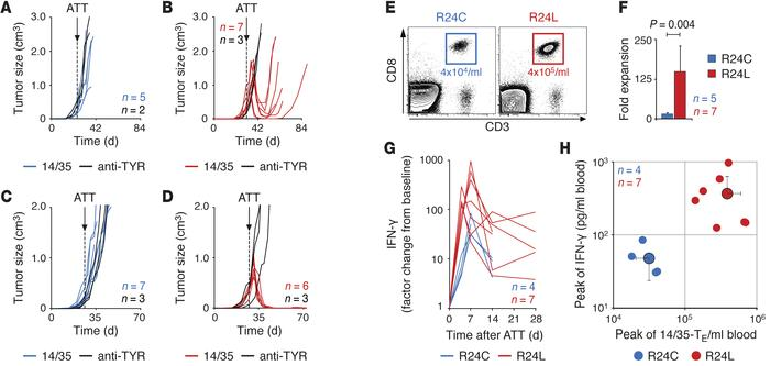 Neoepitope quality determines rejection of large HLA-A2+ tumors by TCR g...