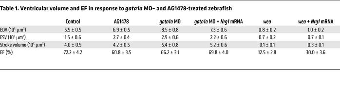 Ventricular volume and EF in response to gata1a MO– and AG1478-treated z...