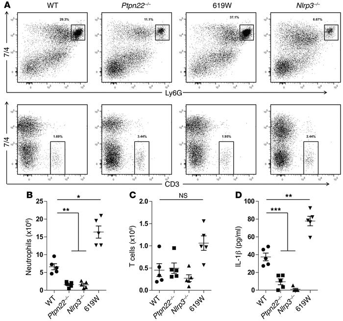 Reduced peritonitis in Ptpn22–/– mice. Acute peritonitis was induced in ...